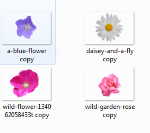 Product picture Transparent Flower Heads - Scrapbooking