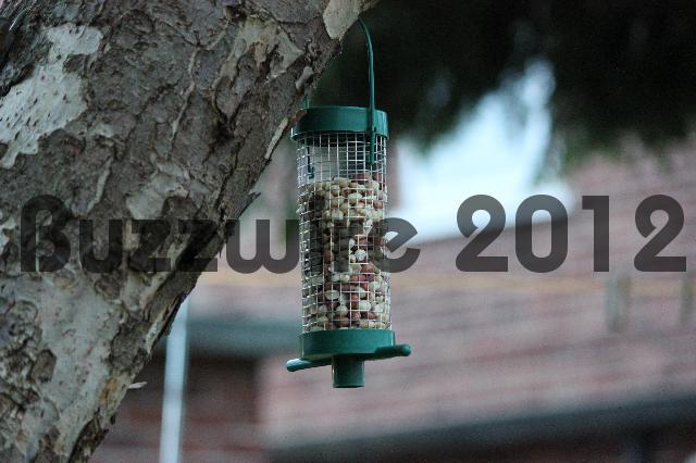 Product picture Bird Feeder 2 - Stock Photo