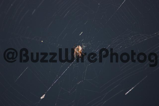 Product picture Spider building web - stock photo