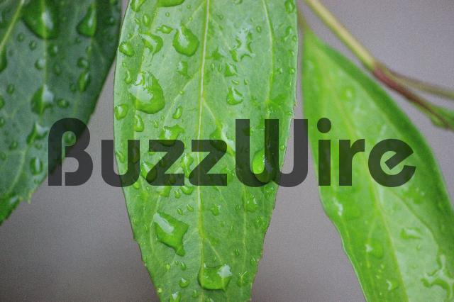 Product picture Rain Drops on a Leaf - Stock Photo #stockphoto